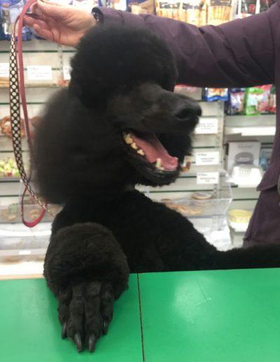 grooming gallery 1