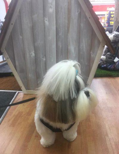 grooming-gallery-34